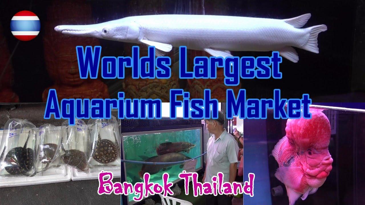Fish aquarium in kurla - Aquarium Fish Market World S Largest Bangkok Amazing Thailand