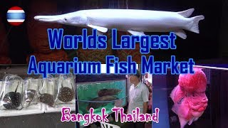 Aquarium Fish Market WORLD