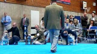 Dog Challenge - Junior Bulldog Club Champ Oct 2010