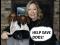 HELP SAVE DOGS! #scoop4subscribe