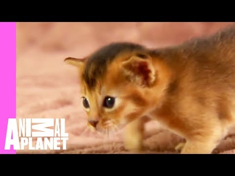 Merrycuteness from too cute youtube for Christmas pictures of baby animals