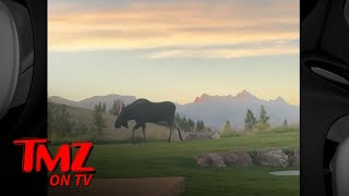 Tyler Perry Has Guest Moose in Backyard of His Home | TMZ TV