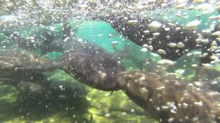Shark in Staniel Cay trying to take a GoPro Hero 3
