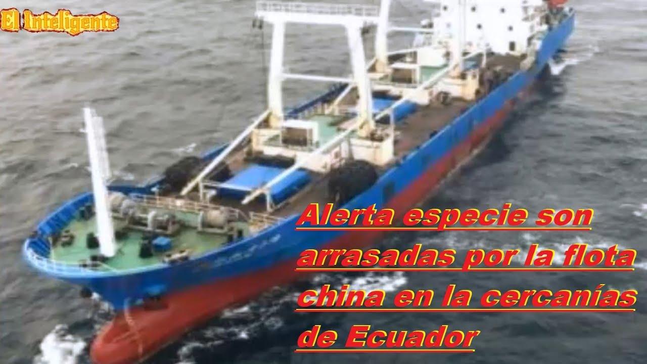 Alerta especie son arrasadas por la flota china en la cercanías de Ecuador