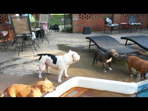 Bullies go for a swim