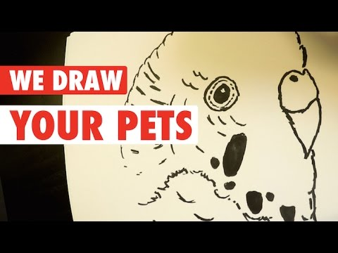 Cartoon Pets || We Draw Your Pets