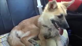 Приют для животных Рязань Телков Сергей возили собачку в больницу