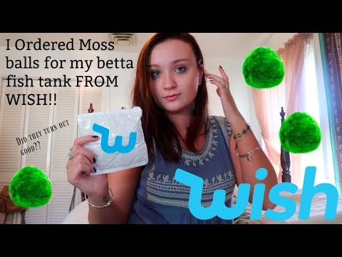 i-ordered-moss-balls-for-my-betta-fish-tank-from-wish!!-|-did-they-turn-out-good?!-|-itsannalouise
