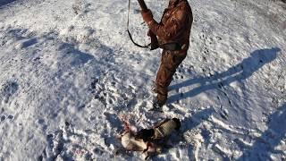 Такса на зайца охота видео