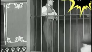 Animals Vs Charlie Chaplin