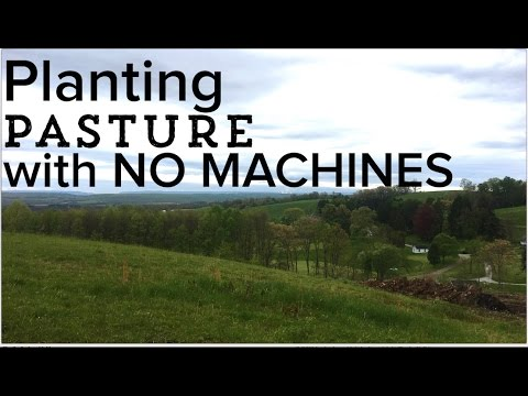 How to Seed a Pasture - Planting a Pasture from Scratch with NO MACHINES
