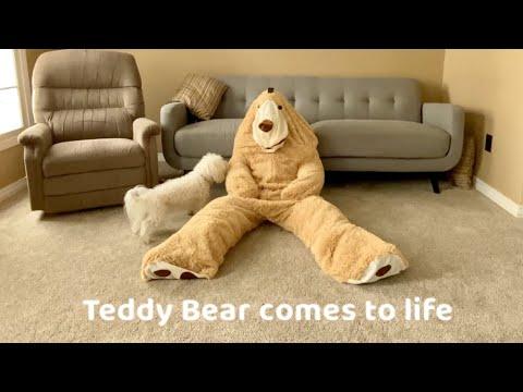 Giant Teddy Bear Prank on Dog!