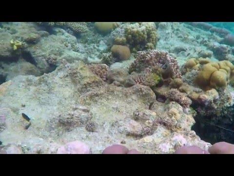 Snorkelling Kitava Island, Trobriand Islands Papua New Guinea