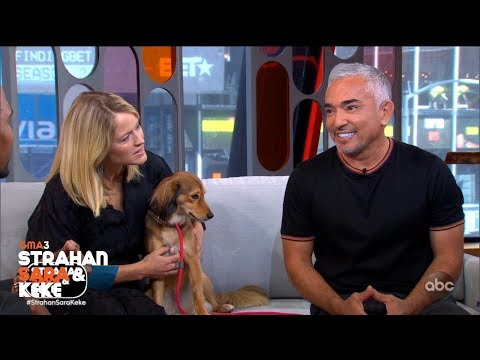 Cesar Millan Reveals The Biggest Mistake Dog Owners Make