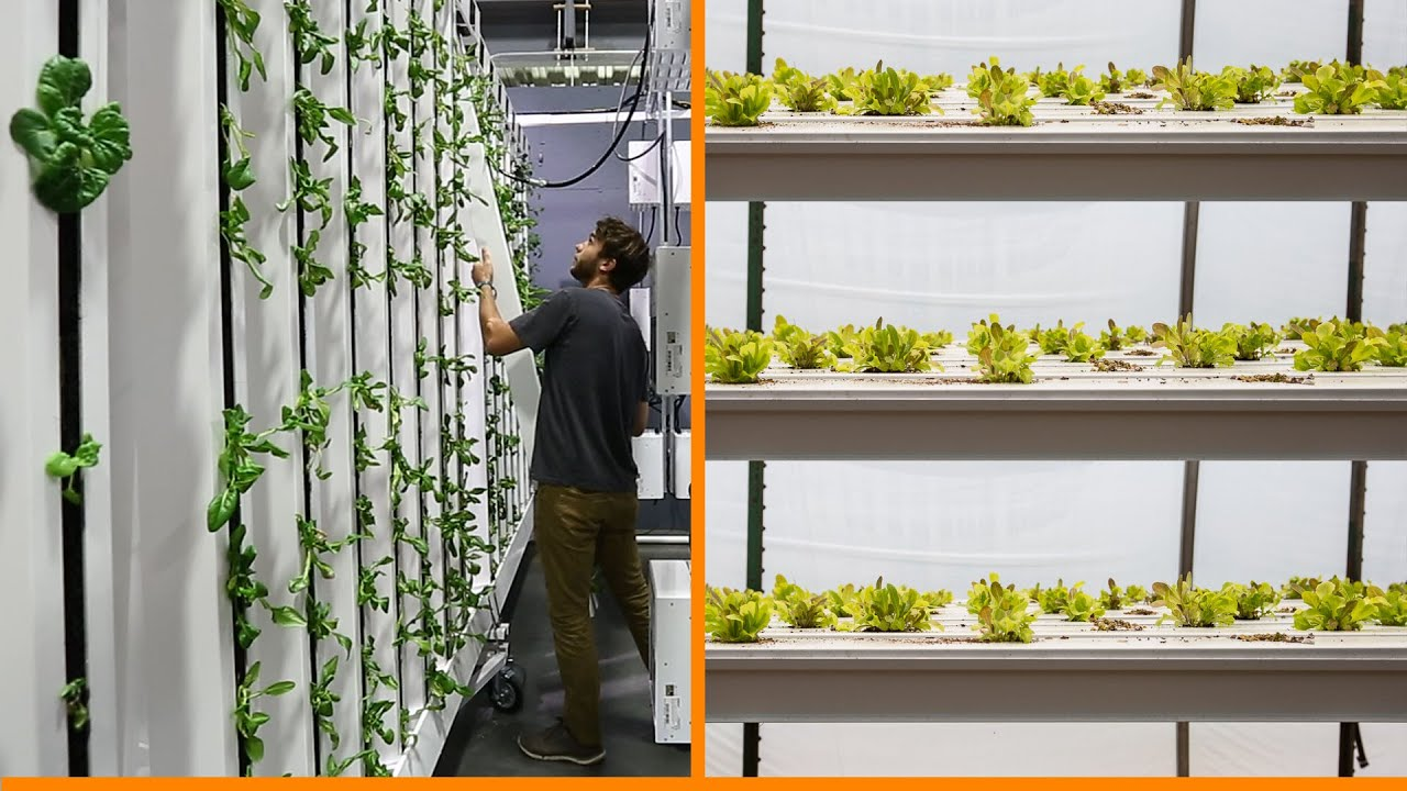 Vertical Farming Horizontal Plane Vs Vertical Plane