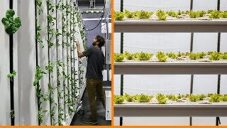 Vertical Farming: Horizontal Plane vs Vertical Plane Production
