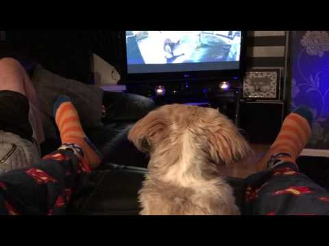 John Lewis official advert. Puppy dog