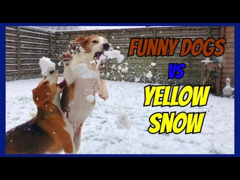 Beagles in Slow Motion : Funny Dogs Louie & Marie