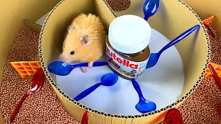 Hamsters in Nutella Maze | 6-Level Maze for Hamster