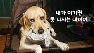 강아지와 뽕 나시를 건 한판승부!!!