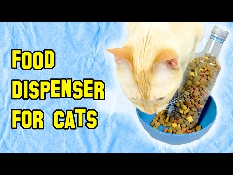 How To Make Automatic Cat Feeder - Cats Tricks