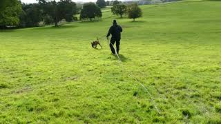 General purpose Police dogs training