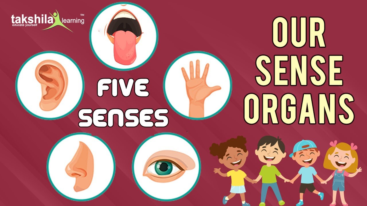 medium resolution of 5 Senses kg Class Video - My sense organs    Science basics for kids    -  YouTube