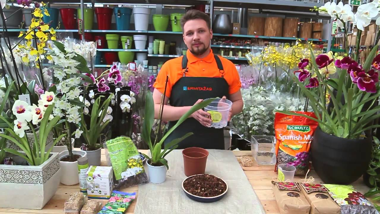 Kiminai orchidėjoms