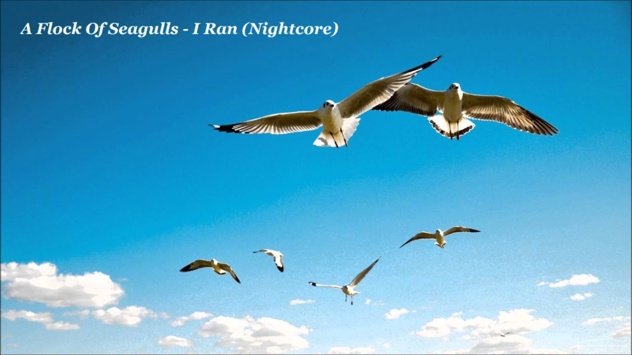 A Flock Of Seagulls I Ran Nightcore Youtube