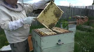 Постановка второго корпуса  Через три недели  Кемеровская система пчеловодства