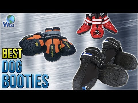 9 Best Dog Booties 2018