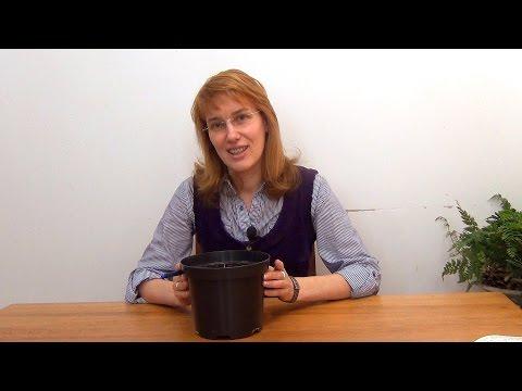 Корень имбиря: полезные - MEDSIDE