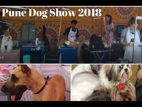 Pune Dog Show 2018 - Preparations before Ring Show