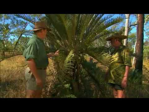 Ray Mears and Les Hiddins - Cycads, Ray Mears Goes Walkabout