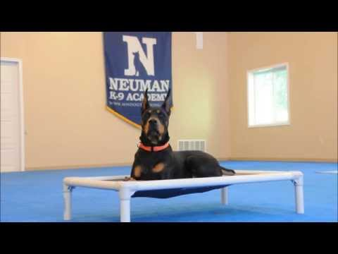 Atlas (Doberman Pinscher) Boot Camp Dog Training Demonstration