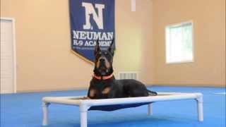 Atlas (doberman Pinscher) Boot Camp Dog Training Demonstration