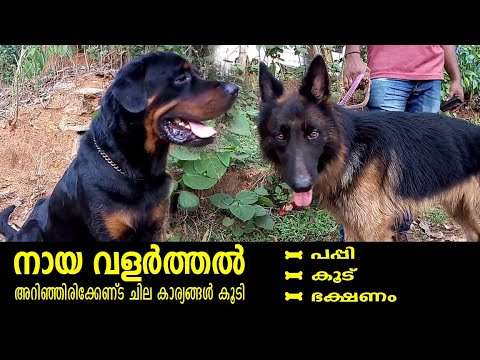 Dog keeping Basic things l Rottweiler dog l German Sheppard l dog farming kerala