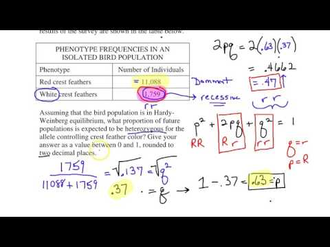 AP Biology Math problems Review 1