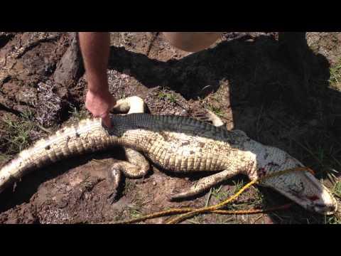 Crocodiles Sex 85