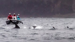 Operation GrindStop 2014: Sea Shepherd Helps Pilot Whales Back Out to Sea
