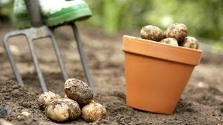 Harvesting Potatoes | At Home With P. Allen Smith