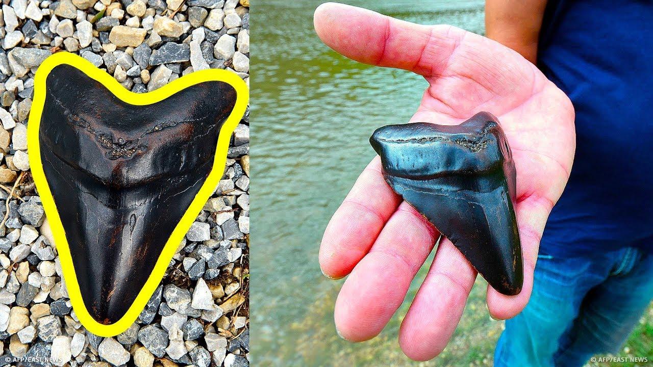 Jak znaleźć ząb megalodona i ile jest wart