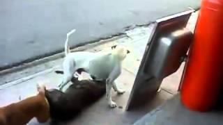 Жесткий секс / The 3 Craziest Dogs In Town Mad Dog Wants a Threesome