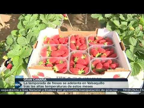 Temporada de recogida de fruta en francia