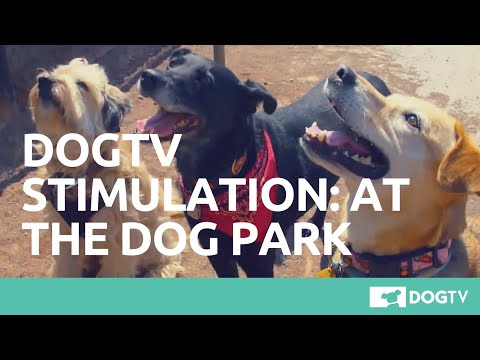 DOGTV STIMULATION: THE DOG PARK