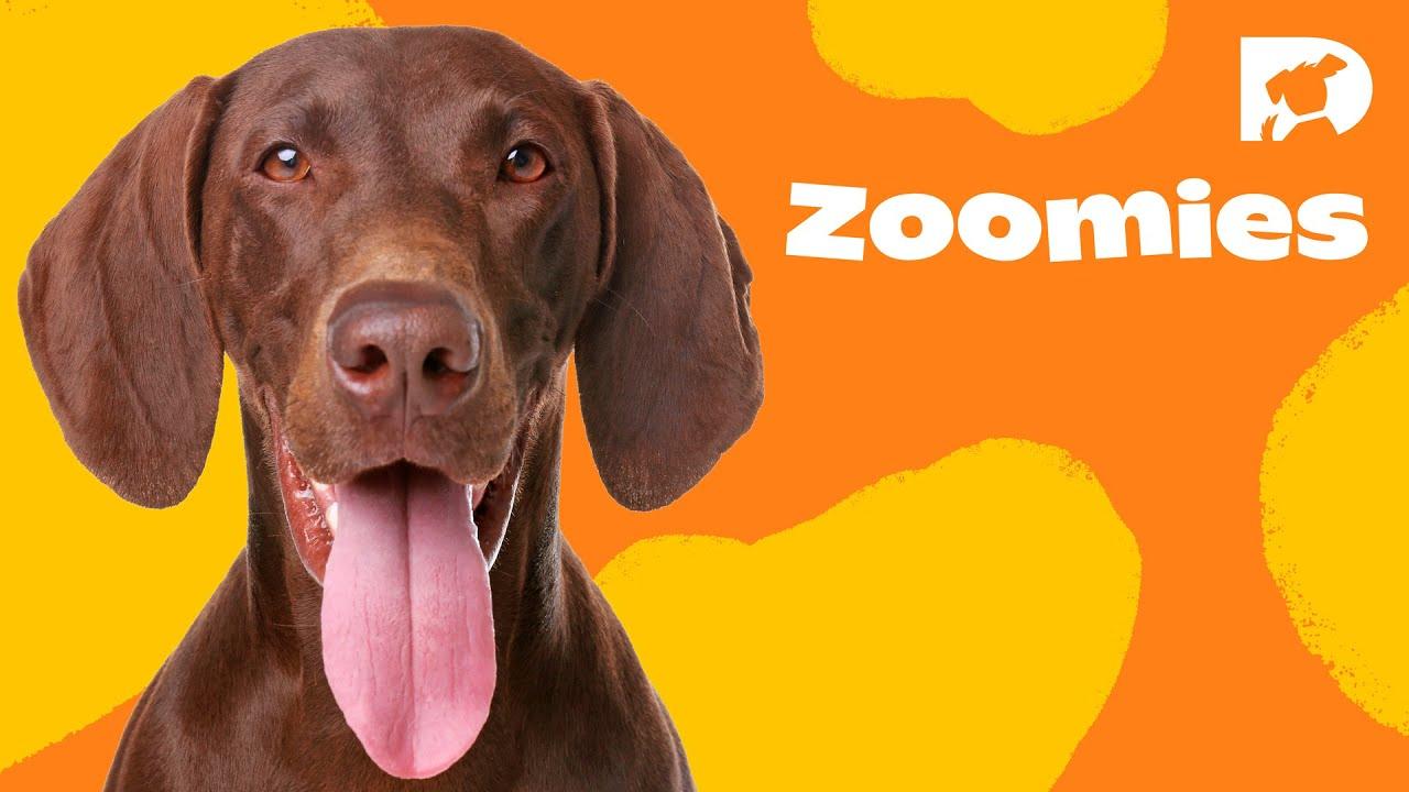 DOGTV STIMULATION: THE DOG PARK (Sample). Visit DOGTV.com for a risk-free trial.