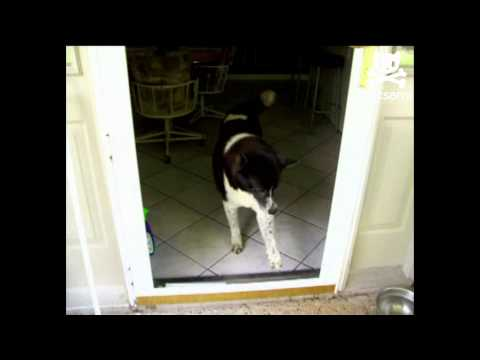 Confused canine stuck behind missing glass door
