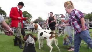 Showing foxhounds born last year that have now joined the pack havi...