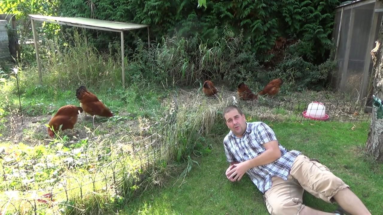 Gemüsegarten erweitern und umgraben | BIO Dünger im Garten Artikelbild