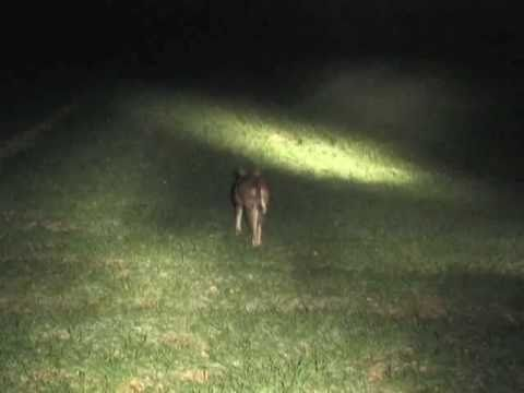 Professional Rabbit Control: Part 1 By Landmark Ferret Films